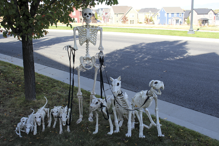 skeletondogs